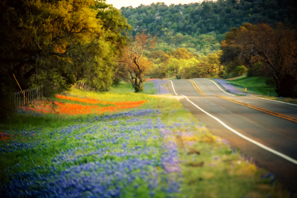 Springtime Bluebonnets and Wildflowers in the Hill Country. Texas photography.