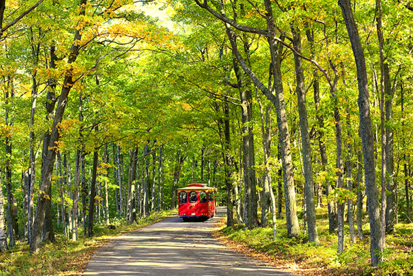The Door County Trolley takes passengers through Peninsula State Park in Wisconsin. Taken at the start of the second week of October, the leaves were about a week or so from peak in the area. (Katya Horner/Slight Clutter Photography)