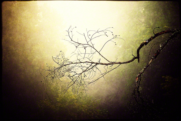 A creepy branch on a foggy morning coupled with texture and vignetting create my nature-driven Halloween image of 2013.