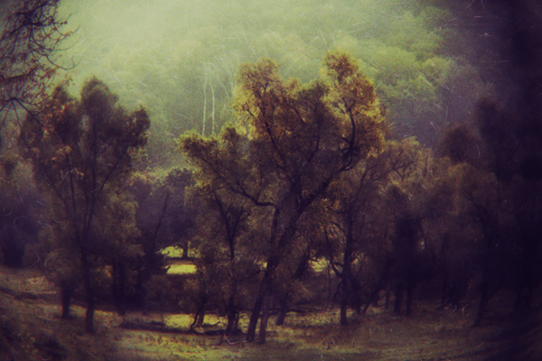 A moody, decorative tree landscape, slightly wicked and timeless. (Katya Horner/Slight Clutter Photography)